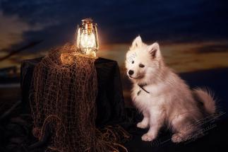 Hundeporträt Fila 4 - Unsere haarigen Lieblinge - tierportraets, portraets, besondere-portraets, allgemein - Tierfotos, Hundeporträts, Geschenke