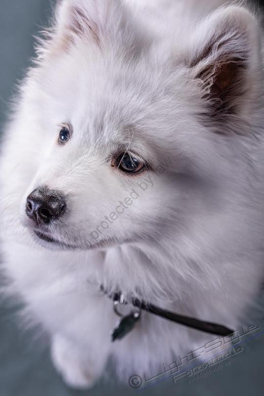 Hundeporträt Fila 6 - Hundeporträt - Fila-6 - tierportraets, allgemein -