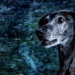 Tierporträt Carbon 7 - Unser Galerie-Shop für Euch ist endlich online - studio-infos, status, angebot-aktion, abseits-des-alltags - Shop, Rund ums Studio, Gewschenke