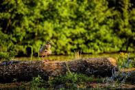 Rodenbach 2018 133 - Neues aus Rodenbach - rund-um-rodenbach, outdoor, naturfotos, natur, abseits-des-alltags - Tierfotos, outdoor, Naturfotos, Draußen, Deutschlands schöne Seiten
