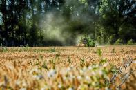 Rodenbach 2018 24 - Neues aus Rodenbach - rund-um-rodenbach, outdoor, naturfotos, natur, abseits-des-alltags - Tierfotos, outdoor, Naturfotos, Draußen, Deutschlands schöne Seiten