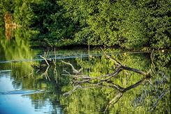 Rodenbach 2018 245 - Neues aus Rodenbach - rund-um-rodenbach, outdoor, naturfotos, natur, abseits-des-alltags - Tierfotos, outdoor, Naturfotos, Draußen, Deutschlands schöne Seiten