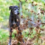 Hundeporträt outdoor 02 - Porträts der Traurigkeit - portraets, besondere-portraets, allgemein, abseits-des-alltags - Porträts, Melancholie, Frauen, besondere Porträts