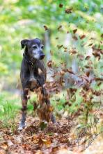 Hundeporträt outdoor-02