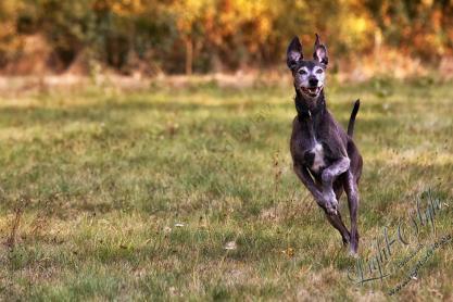 Kangaroo oder Hase ???