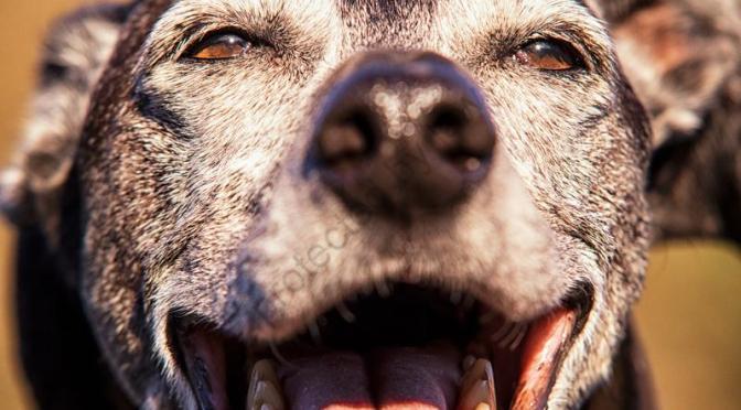 Langweilige Hundefotos?—- neeeeeeee ;-)
