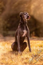 Hundeporträt outdoor-17