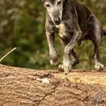 Hundeporträt outdoor 20 - Es läuten die Glocken - rund-um-rodenbach, non-commercial, allgemein, abseits-des-alltags - Rodenbach, non commercial, Kirchen