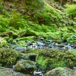 sächsische Schweiz Bastei 2018 169 - Hallo Welt! - allgemein -