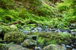 sächsische Schweiz Bastei 2018 169 - sächsische Schweiz - traumhafte Natur - outdoor, naturfotos, natur-staedte-deutschland, natur, allgemein - Sachsen, Naturfotos, Deutschlands schöne Seiten