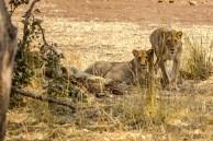 Südafrika 2019 2247 - Afrika - Ein Traum wurde wahr - urlaubsfotos, outdoor, offene-worte, non-commercial, naturfotos, natur, allgemein, alles, abseits-des-alltags -
