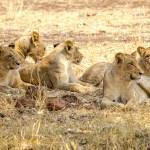 Südafrika 2019 2256 - Die wilde Bestie ;-) - tierportraets, portraets, allgemein - Tierfotos, Hundeporträts, Hunde