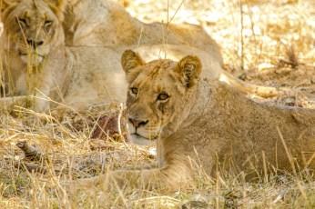 Südafrika 2019 2299 - Afrika - Ein Traum wurde wahr - urlaubsfotos, outdoor, offene-worte, non-commercial, naturfotos, natur, allgemein, alles, abseits-des-alltags -