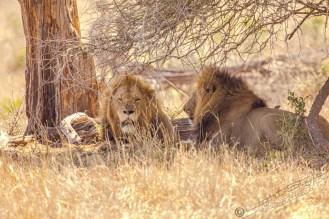 Südafrika 2019 2432 - Afrika - Ein Traum wurde wahr - urlaubsfotos, outdoor, offene-worte, non-commercial, naturfotos, natur, allgemein, alles, abseits-des-alltags -