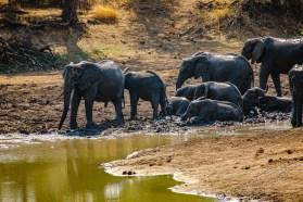 Südafrika 2019 2477 - Afrika - Ein Traum wurde wahr - urlaubsfotos, outdoor, offene-worte, non-commercial, naturfotos, natur, allgemein, alles, abseits-des-alltags -