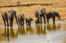 Südafrika 2019 2507 - Afrika - Ein Traum wurde wahr - urlaubsfotos, outdoor, offene-worte, non-commercial, naturfotos, natur, allgemein, alles, abseits-des-alltags -