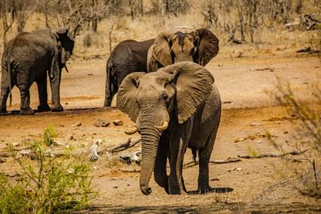 Südafrika 2019 2599 - Afrika - Ein Traum wurde wahr - urlaubsfotos, outdoor, offene-worte, non-commercial, naturfotos, natur, allgemein, alles, abseits-des-alltags -
