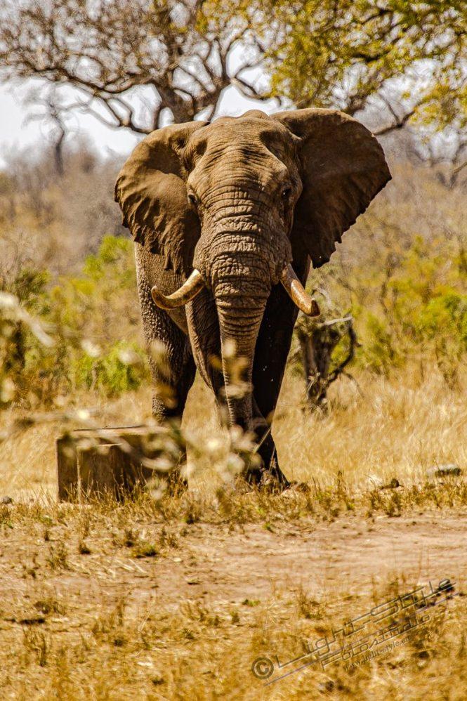 Südafrika 2019 2641 800x1200 - Afrika - Ein Traum wurde wahr - urlaubsfotos, outdoor, offene-worte, non-commercial, naturfotos, natur, allgemein, alles, abseits-des-alltags -