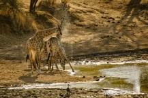 Südafrika 2019 2848 - Afrika - Ein Traum wurde wahr - urlaubsfotos, outdoor, offene-worte, non-commercial, naturfotos, natur, allgemein, alles, abseits-des-alltags -