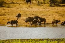 Südafrika 2019 2876 - Afrika - Ein Traum wurde wahr - urlaubsfotos, outdoor, offene-worte, non-commercial, naturfotos, natur, allgemein, alles, abseits-des-alltags -