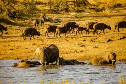Südafrika 2019 2897 - Afrika - Ein Traum wurde wahr - urlaubsfotos, outdoor, offene-worte, non-commercial, naturfotos, natur, allgemein, alles, abseits-des-alltags -