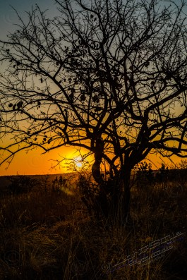 Südafrika 2019 354 - Afrika - Ein Traum wurde wahr - urlaubsfotos, outdoor, offene-worte, non-commercial, naturfotos, natur, allgemein, alles, abseits-des-alltags -