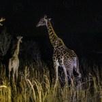 Südafrika 2019 575 - Winterimpressionen - allgemein - Urlaub, outdoor, Naturfotos, Draußen, Deutschlands schöne Seiten