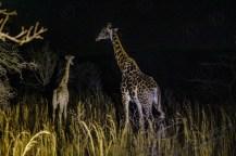 Südafrika 2019 575 - Afrika - Ein Traum wurde wahr - urlaubsfotos, outdoor, offene-worte, non-commercial, naturfotos, natur, allgemein, alles, abseits-des-alltags -