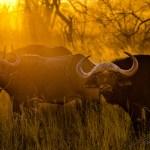 Südafrika 2019 91 - Fotowettbewerb Rodenbach 990 Jahre - rund-um-rodenbach, allgemein - Rodenbach, Allgemein