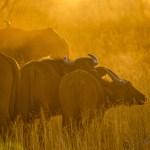 Südafrika 2019 93 - Unsere haarigen Lieblinge - tierportraets, portraets, besondere-portraets, allgemein - Tierfotos, Hundeporträts, Geschenke