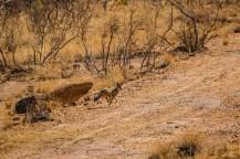 Südafrika 2019 940 - Afrika - Ein Traum wurde wahr - urlaubsfotos, outdoor, offene-worte, non-commercial, naturfotos, natur, allgemein, alles, abseits-des-alltags -
