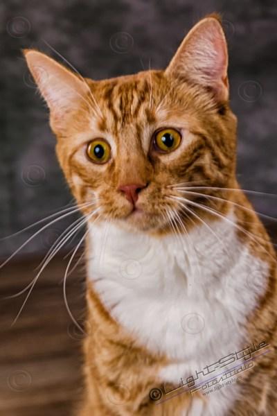 Hunde & Katzenporträts, Cats & Dogs, Fotostudio Light-Style`s Blog, Fotostudio Light-Style`s Blog