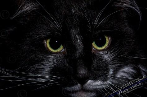 TF21M0101 14 - Neu - Tierporträt Faces - tierportraets, irisfotos, besondere-portraets, allgemein, abseits-des-alltags - Tierporträts, Tierfotos, Pferde, Haustiere