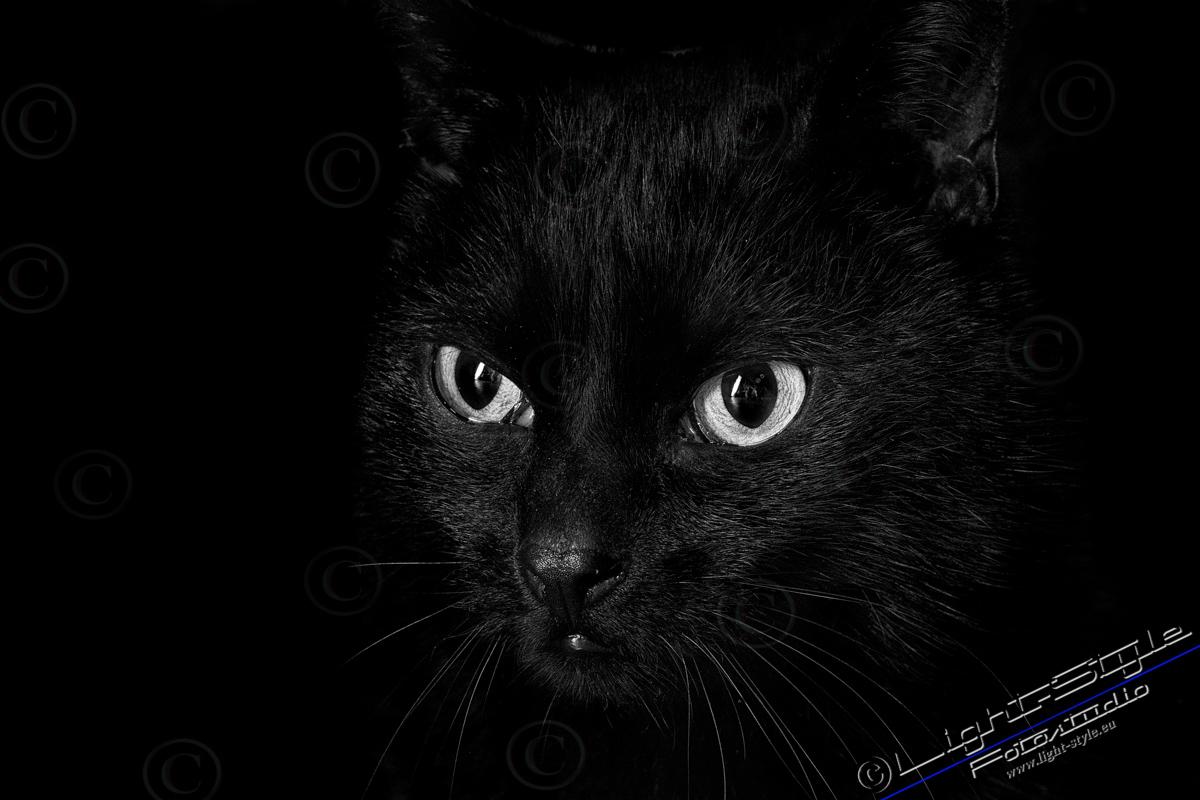 TF21N0101 10 - Neu - Tierporträt Faces - tierportraets, irisfotos, besondere-portraets, allgemein, abseits-des-alltags - Tierporträts, Tierfotos, Pferde, Haustiere