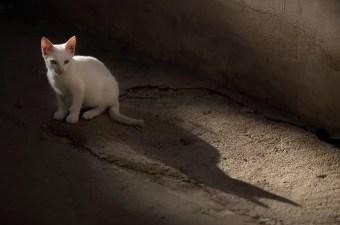 Dubrovnik Cat