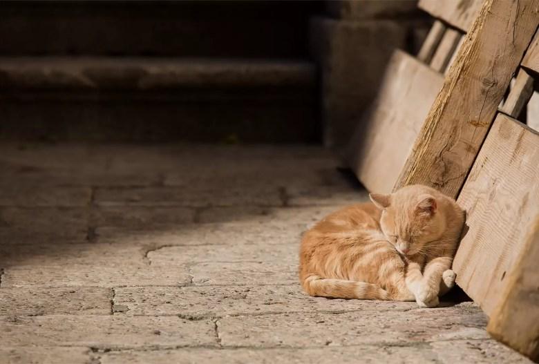 dubrovnik orange cat