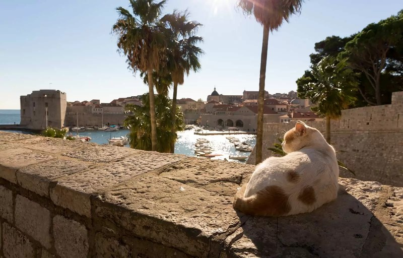 Watching over the harbor, Dubrovnik.