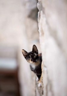 Cat in a wall, Dubrovnik.