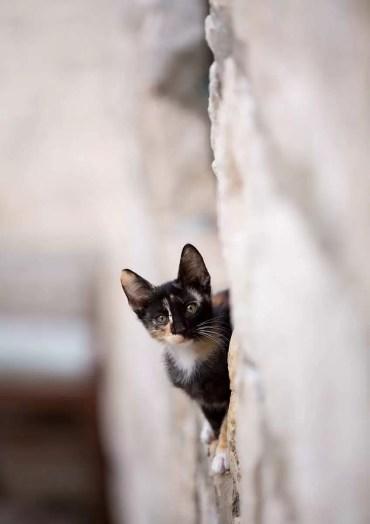 Cat in a wall, Dubrovnik.