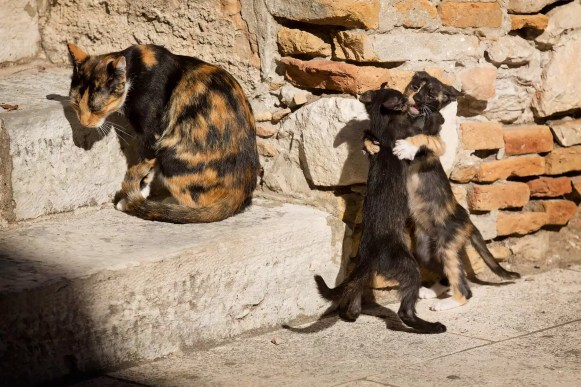 dancing-cats-in-dubrovnik