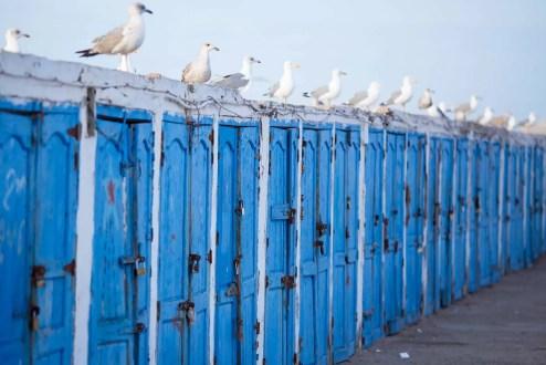 Seagull sentries.
