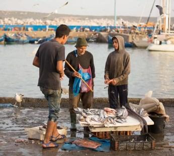 Scene from a dockside fish market.