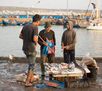 Scene from a dockside fish market.