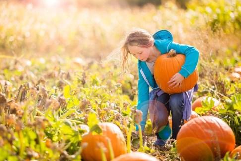 C in pumpkin patch