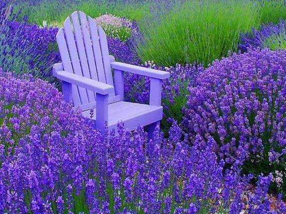Meditation-in-lavendar