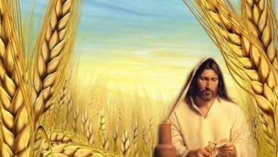 Photo of باقة من التأملات المسيحية من كلمات الأب موكاب