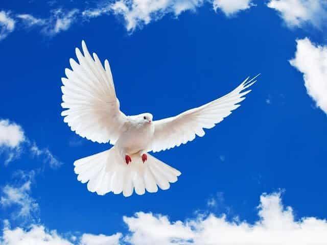 نداء السلام نريد حياة السلام نريد أن نكون جيل السلام