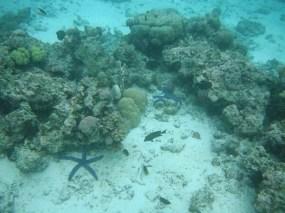 Gizo - Starfishes