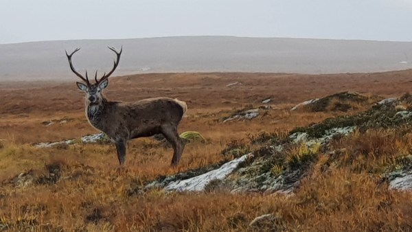 See Highland stags if you go off the beaten track