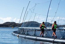 Signify Scaleaq Sustainable Aquaculture Solutions